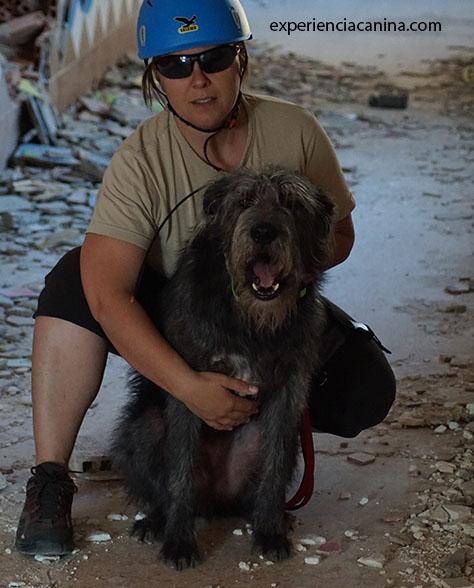Adiestramiento de perros | Servicios profesionales